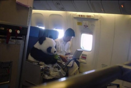 pandaplane