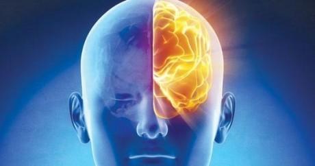 brainhalf2