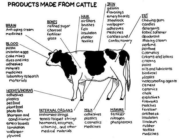 cowstuff